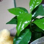 グリーンな観葉植物はオシャレで癒やしのインテリア